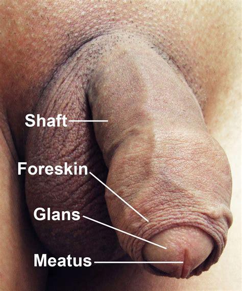 how big is a 8 penis jpg 1413x1700